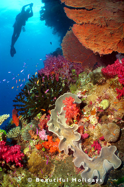 scuba diving coral reef in the solomon islands
